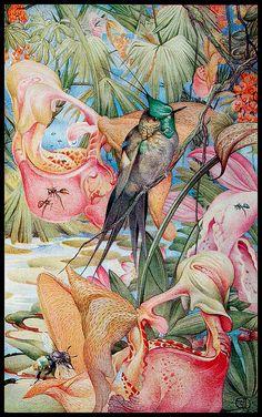 "Edward Julius Detmold - illustration from ""Hours of Gladness"" by sofi01, via Flickr"