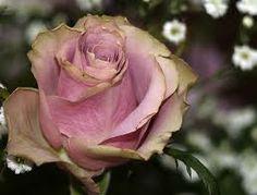 memory lane roses - Google Search