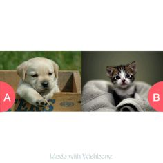 Dogs or Cats? Click here to vote @ http://getwishboneapp.com/share/2628249