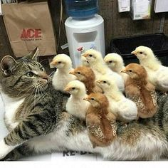 Bloody hell there are too many chicks for me to eat It's because I returned the first one isn't