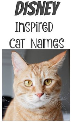 Disney Inspired Cat Names From Figaro To Cheshire The Options Are Almost Endless