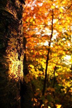 Странная все же выдалась эта осень.  То не переставая лили дожди, проносились быстрые злые ветры, то, почти тут же, по-летнему обжигало солнце. Там, наверху, шла не видимая глазу борьба.