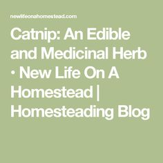Catnip: An Edible and Medicinal Herb • New Life On A Homestead | Homesteading Blog