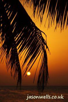 Palm tree silhouette at sunset #Cuba #Caribbean #dusk