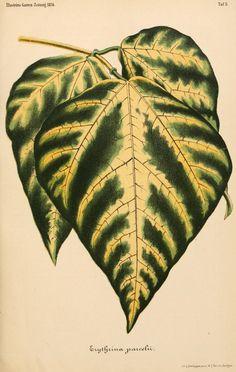 bd. 18, 1874 - Illustrierte Garten-Zeitung. - Biodiversity Heritage Library