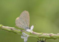 Butterfly Mutations post-Fukushima