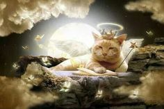 My cat died today she was 14 yrs old and I was holding here when she passed... She will always be in my heart!! Thanks for sharing..