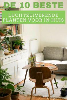 Het leefklimaat en de luchtkwaliteit in huis verbeter je aanzienlijk met deze luchtzuiverende kamerplanten.