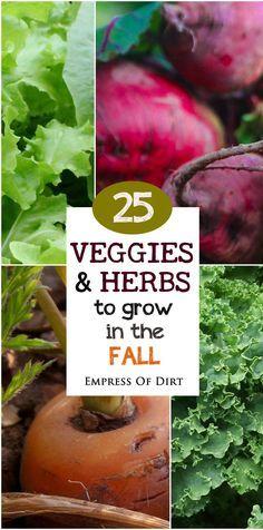 25 Veggies & Herbs to Grow in the Fall