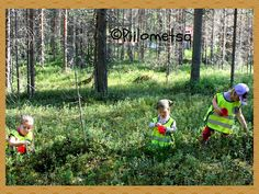 Piilometsän väki: KERÄILIJÄ - marjoja,yrttejä ja sieniä etsimässä