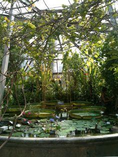 Lyon, jardin botanique - Modetico 2013