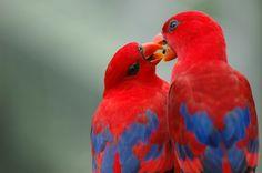Community Post: 34 Stunning Pictures Of Exotic Birds Pretty Birds, Love Birds, Beautiful Birds, Animals Beautiful, Cute Animals, Birds Photos, Beautiful Things, Beautiful Pictures, Exotic Birds