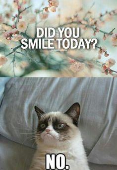 haha. I love grumpy cat.