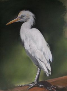 Egret Animal and Wildlife Subjects Peeps, Around The Worlds, Drawings, Artwork, Artist, Animals, Work Of Art, Animaux, Animales