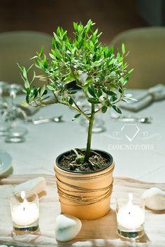 Olive pot centerpiece! For more great ideas visit:   https://www.instagram.com/diamond_event_planners/  https://plus.google.com/u/0/+DiamondeventsGr  https://gr.pinterest.com/diamondwedding/  https://www.facebook.com/Diamond-Event-Planners-176242063682/  http://diamondevents.gr/   #london #engange #lady #glamour #ff #trend #hotel #purple #design #gettingmarried #weddingparty #kuwait #Lebanon #abudhabi #australia #Lebanese #boston #germany #italy  #bride #love #bestwedding #celebrity