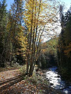 Wonderful nature in autumn - wunderbare Naturlandschaft im Herbst Ski Wm, Das Hotel, Plants, Last Minute Vacation, Ski Trips, Summer Vacations, Road Trip Destinations, Horseback Riding, Plant