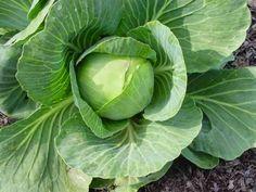 Η ΛΙΣΤΑ ΜΟΥ: Το λάχανο και η διατροφική του αξία