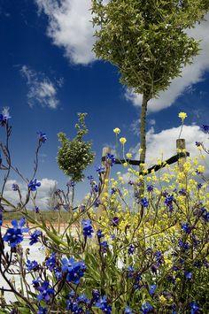 Primer plano de flores en una zona peatonal de Valdebebas, via Flickr