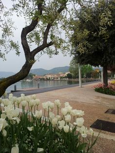 Bardolino, Lake Garda | To learn more about #Verona click here:             http://www.greatwinecapitals.com/capitals/verona