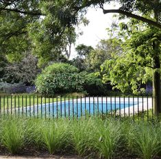 Steel Rod Pool Fence by Eckersley Garden Architecture Backyard Pool Landscaping, Pool Fence, Acreage Landscaping, House Landscape, Landscape Design, Fence Design, Garden Design, Pool Remodel, Fence Plants