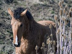 Expert Equestrian Articles - The Curly Sport Horse Breed Profile - Equitrekking