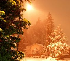 Christmas, by Tollen (from flickr)