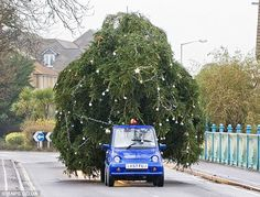 I saw a Christmas tree driving by with a Smart car attached to it.