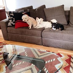 Gangs all here❤🐾 Living Room Goals, Living Room Decor, July 4th, American, Instagram, Home Decor, Drawing Room Decoration, 4th Of July, Decoration Home
