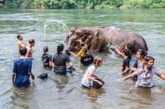 Image result for bathing elephants in thailand