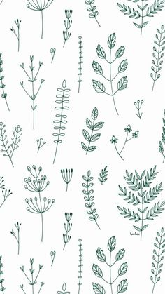 Plants ★ iPhone wallpaper