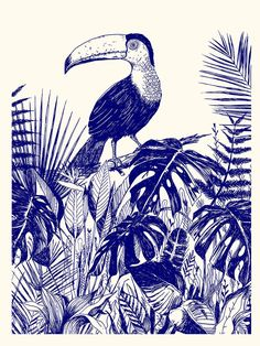 Beautiful indigo illustration called TOUCAN a collaboration between David Lanaspa and Oph lie Dhayere Illustration Jungle, Watercolor Illustration, Watercolor Paintings, Jungle Art, Modern Photography, Ink Illustrations, Printmaking, Sketches, Drawings