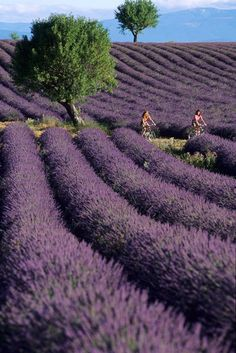 Provence - France. The French Dream. Take me away ...