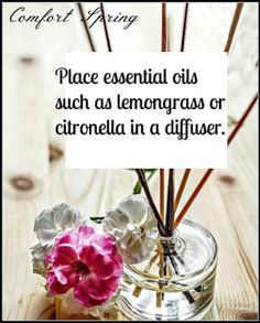 Place essential oils in diffuser to help repel flying insects