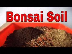 "How to Make Bonsai soil for Beginners | Bonsai Soil Tips  | Bonsai Soil in India // Mammal Bonsai - YouTube #""howtogardenforbeginners"" #GardeningTipsPacificNorthwest"