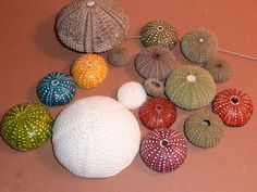 sea urchin tutorial for polymer clay