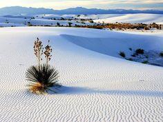 Cuatro Ciénegas, un ecosistema único en el mundo proclamado Área Natural Protegida, en 1994, y considerado por la NASA como el lugar que conserva estructuras calcáreas fósiles similares a las encontradas en Marte.