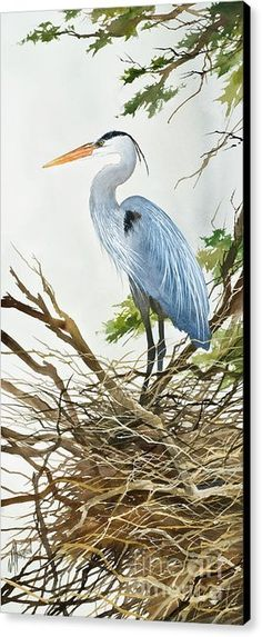 Herons Nest Canvas Print by James Williamson. All canvas prints are professionally printed, assembled, and shipped within 3 - 4 business days and delivered ready-to-hang on your wall. Choose from multiple print sizes, border colors, and canvas materials. Bird Pictures, Pictures To Paint, Watercolor Bird, Watercolor Paintings, Watercolors, Bird Artwork, Sea Birds, Wildlife Art, Gravure