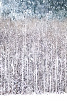 Birch trees in snow- This is a photograph but it's almost like a Jackson Pollock painting... I may try painting it myself