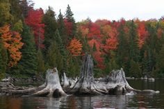 This pic was on the weathernetwork site thought it should be shared. I love the stumps in the foreground