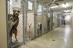 Be a hero, adopt a shelter dog!