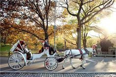 riding to a Central Park wedding by horse and carriage