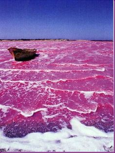 SO PRETTY!!!!! Senegal's Lake Retba, or as the French refer to it Lac Rose, is pinker than any milkshake. Experts say the lake gives off its pink hue due to cyanobacteria, a harmless halophilic bacteria found in the water. Lake Retba has a high salt content, much like that of the Dead Sea, allowing people to float effortlessly in the massive pink water