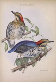 v.1 - The genera of birds : - Biodiversity Heritage Library