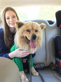 Pictures of Sugar Bear a Chow Chow/Collie Mix for adoption in Willingboro, NJ who needs a loving home.