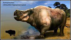 Brontotheriidae | brontotheriidae Aktautitan