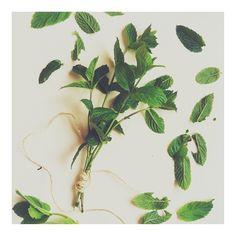 Instagram photo by @gogioko (Lukas Korschan) | Iconosquare