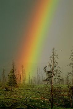 ✮ A brilliantly colored rainbow ends in a barren forest