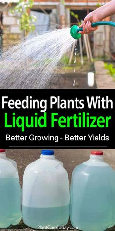 Liquid Fertilizer - How To Feed Plants, Grow Better & Improve Yield Liquid fertilizer many home gardeners use because of fast results, easy use, safe and many more ways to apply than dry chemical fertilizers {LEARN MORE] Fertilizer For Plants, Liquid Fertilizer, Homemade Plant Fertilizer, Organic Fertilizer, Gardening For Beginners, Gardening Tips, Square Foot Gardening, Garden Pests, Garden Fertilizers