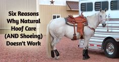 Great article on natural hoof care and shoeing!