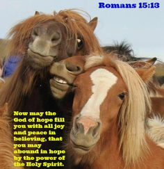 Biblical quotes/Christian dispositions on animals?